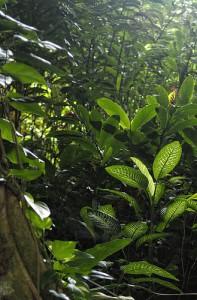 wachsender Wald
