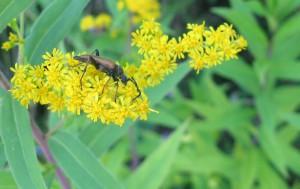 Ein Käfer auf einer Blüte